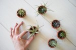 air-plant-garden-mini-pot-with-airplant